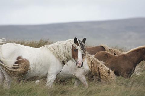 horse-4572080_960_720