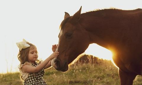 horse-3970041_960_720