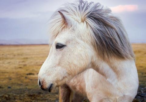 pony-2235916_960_720