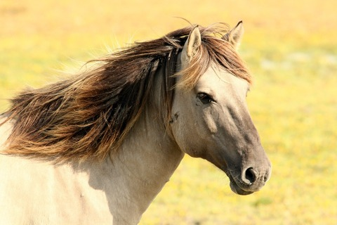 horse-197199_960_720