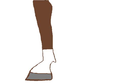 肢部の白斑(一白)