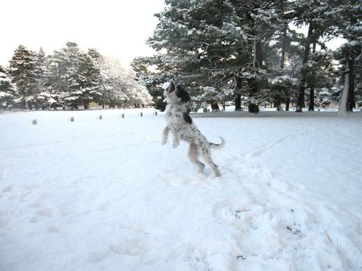 snow-20084