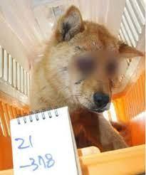 韓国動物虐待3