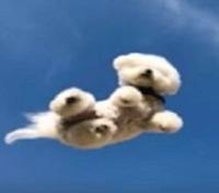 空犬 韓国動物虐待