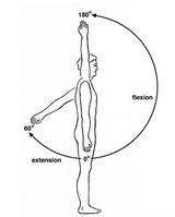 shoulder rotation