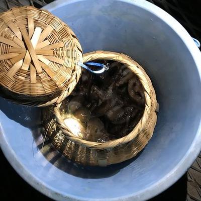 夜の海の蛸壺