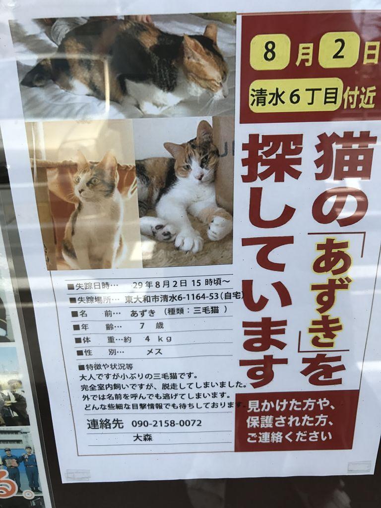 東大和市地域  猫探し