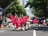 真花2010.6.12.2