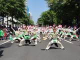 真花2010.6.12.3