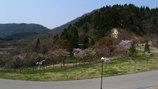 富山2009.4.18.3