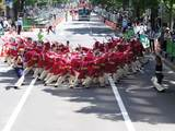 真花2010.6.13.2