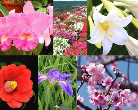 やんばる花