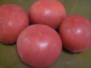 横浜トマト