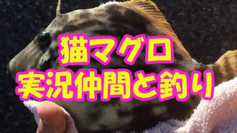 猫マグロ、大物になってしまった実況者と釣りへ行く。【武道館を満杯にしたアイツら】