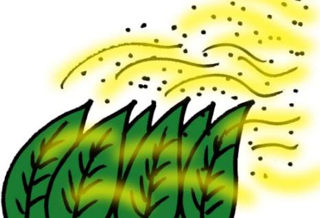 【悲報】湯毛、花粉症発症