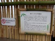 竹トンネルの紹介