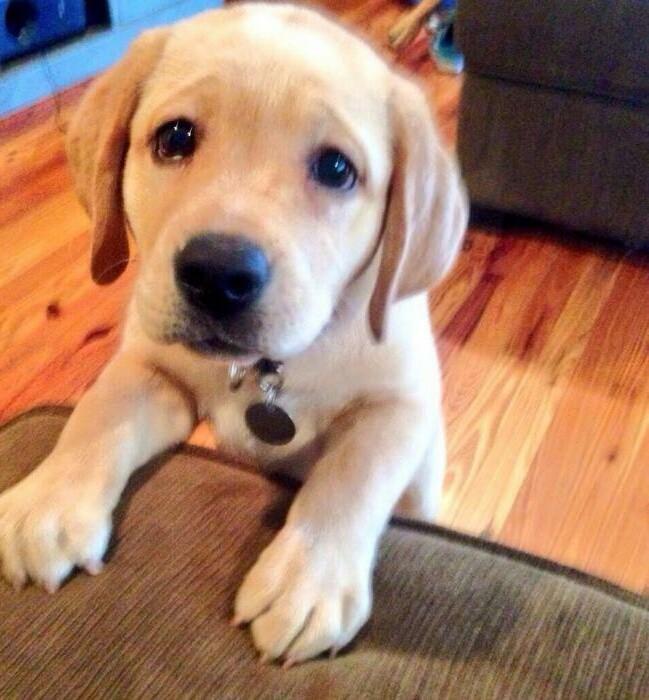 ウチの犬、お腹が減るとこんな顔しておねだりしてくるんだがw