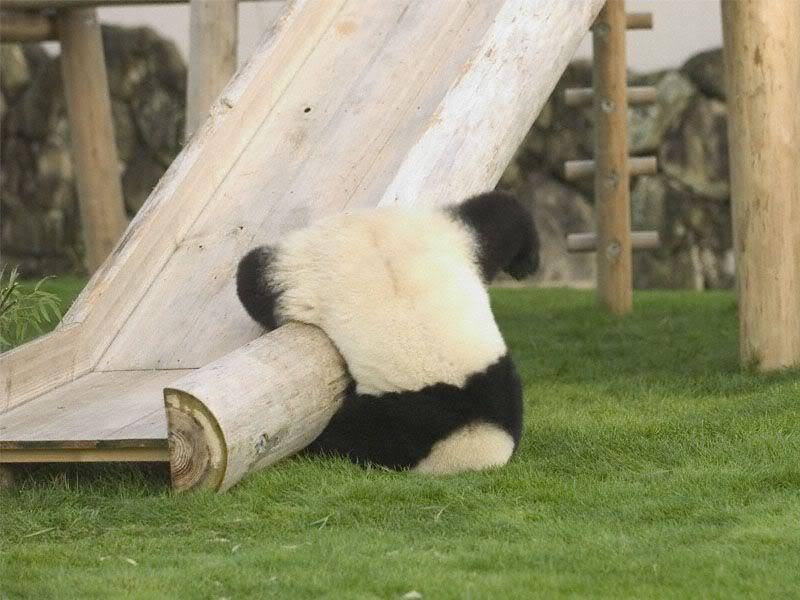 滑り台から落ちるパンダがかわいすぎる