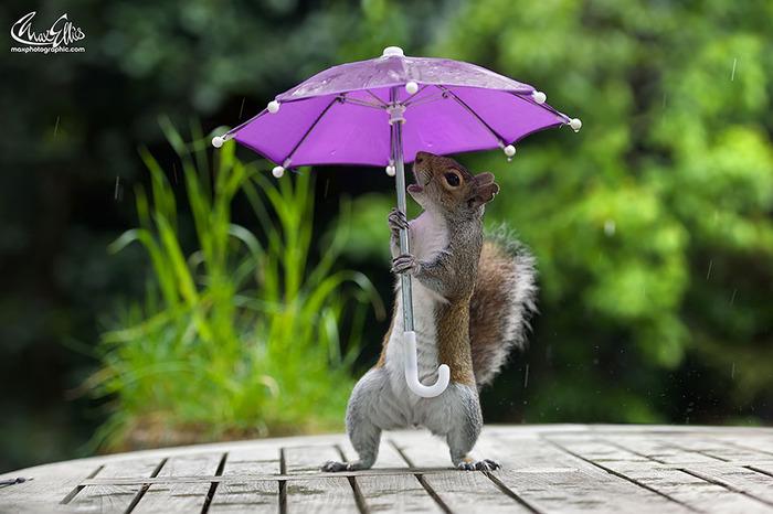 squirrel-umbrella-rain-squirrelisimo-max-ellis-2