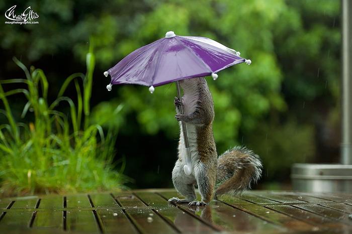 squirrel-umbrella-rain-squirrelisimo-max-ellis-3