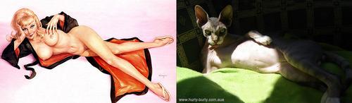 美女と猫4