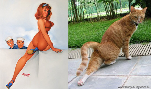美女と猫3