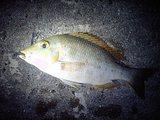 2008_10_04-05fishing001