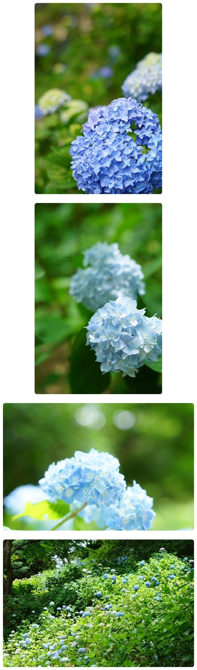 ■DSC02326-vert