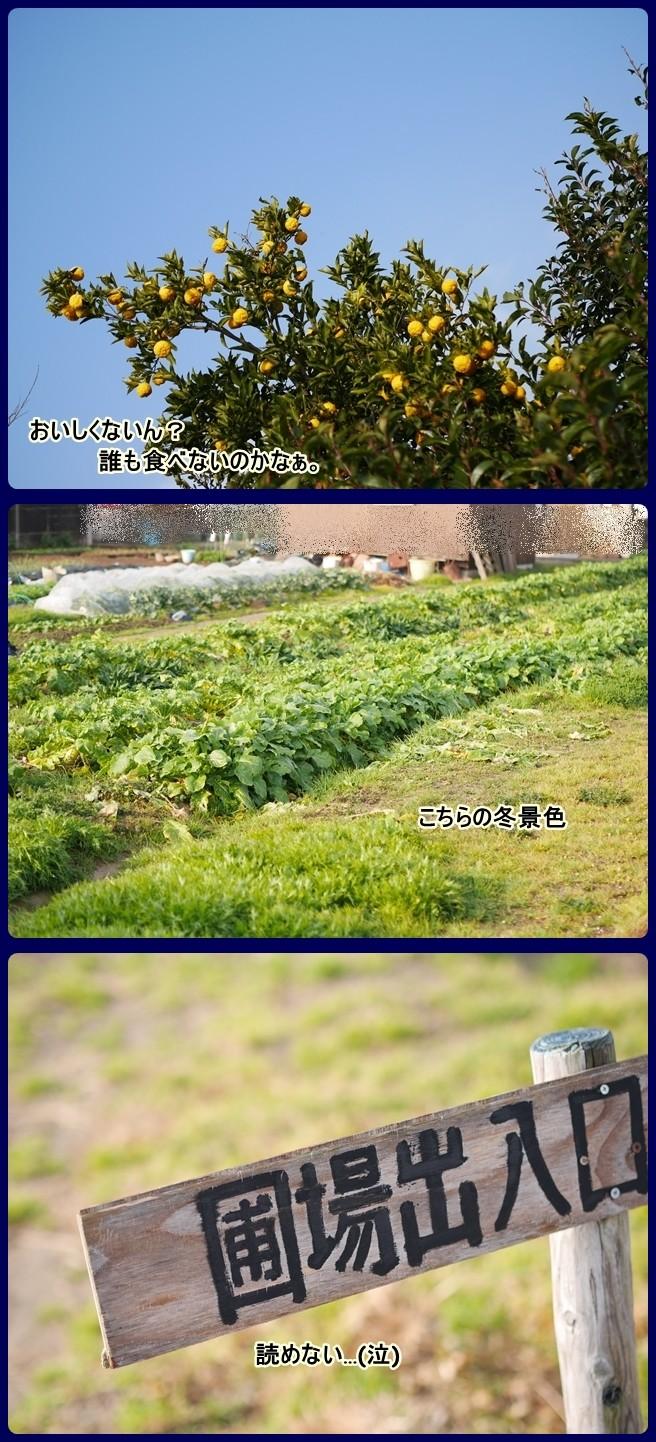 ■P1190200-vert