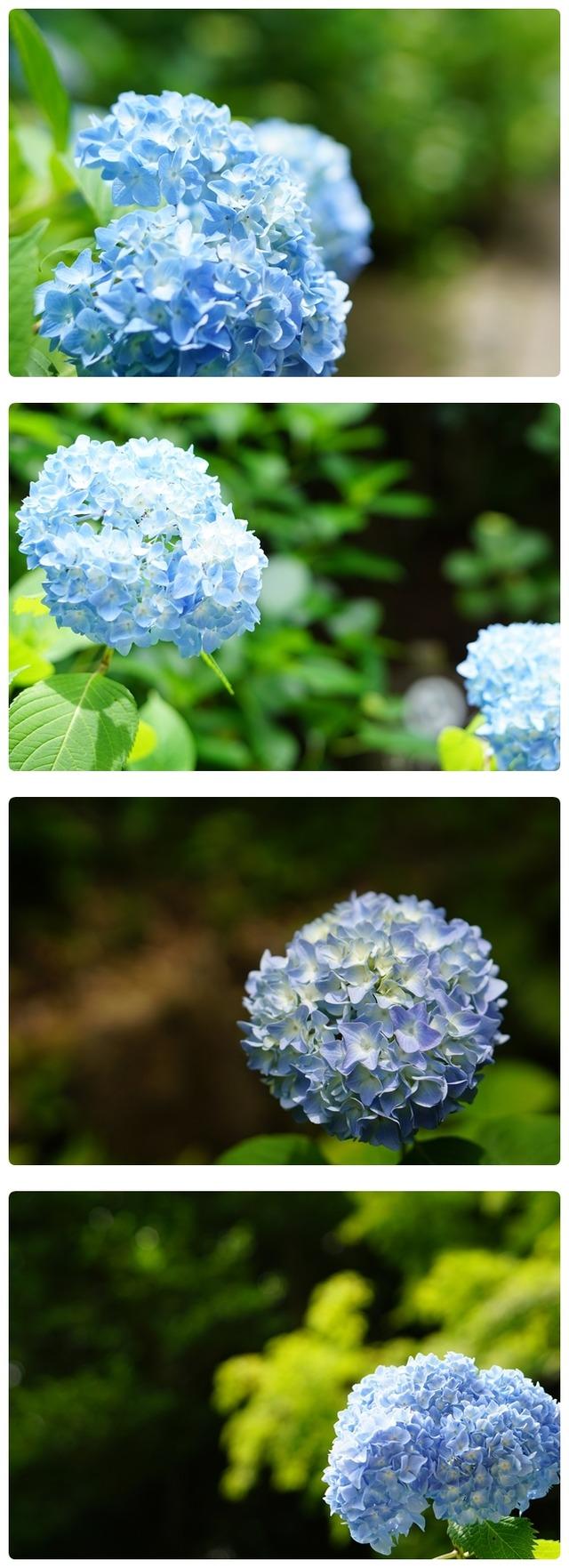 ■DSC02338-vert