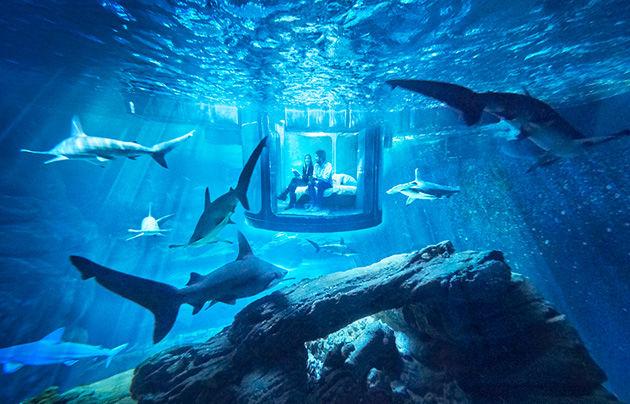 airbnbにサメに囲まれて360°の海中ビューを楽しめる部屋「L'aquarium de Paris avec 35 requins」
