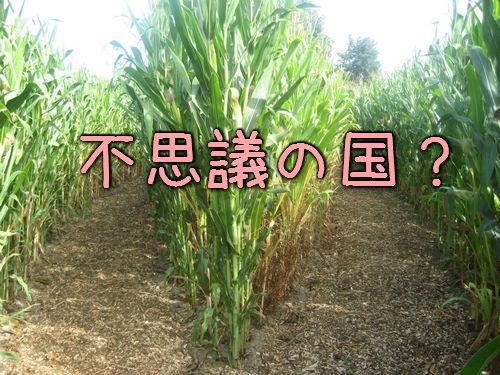 クオリティが素晴らしい…トウモロコシ畑で作った「不思議の国のアリス」の迷路