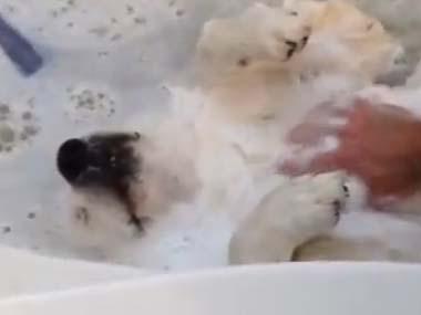 イヌを「お風呂」で洗ってみた → リラックスしすぎてヤバイ!!