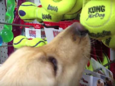保護した子イヌを初めてお店につれてきた。好きな「おもちゃ」を買ってあげるよ → 結果