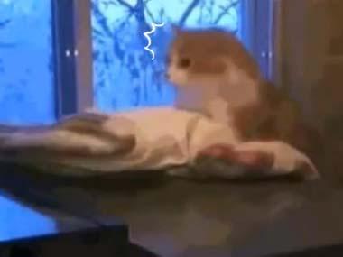 ネコが窓辺でくつろいでいた → ゴロニャンする → 「ターミネーター」みたいになる