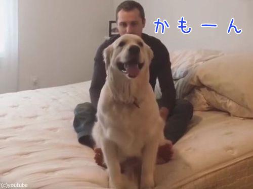 犬と飼い主の信頼関係がすごい…背中からダイブする(動画)