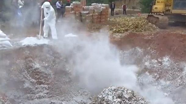 【動画】中国、フィリピン産バナナ35トンから残留農薬を検出!穴掘って埋める [海外]