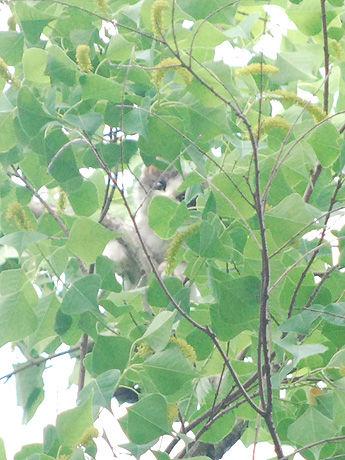 助かったニャー 奈良で子猫救出劇、15メートルの木から鳴き声