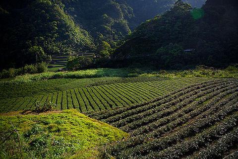 ワイ文系都会育ち大学生、田舎で農業をしたい
