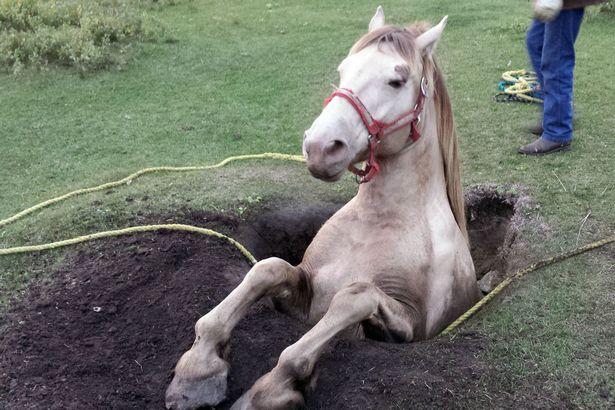 【悲報】馬がうまる
