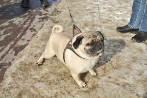 lubeck dogs (7)