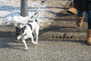 lubeck dogs (3)