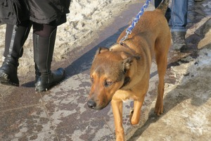 lubeck dogs (6)
