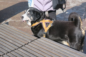 lubeck dogs (14)