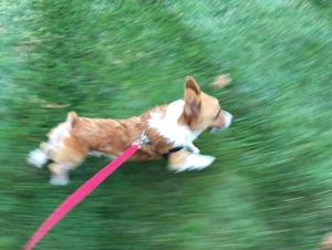 yoshi run