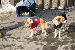 lubeck dogs (2)