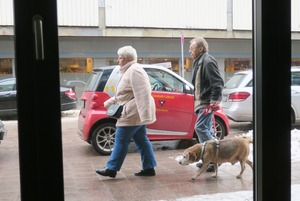 lubeck dogs (10)