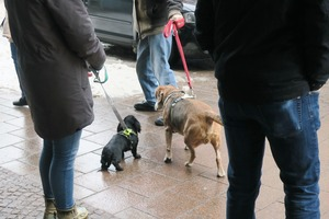 lubeck dogs (11)