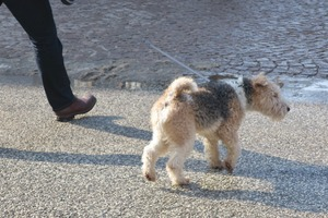 lubeck dogs (5)
