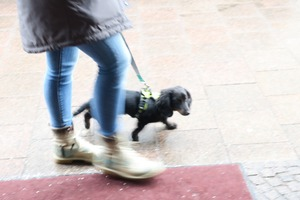 lubeck dogs (12)